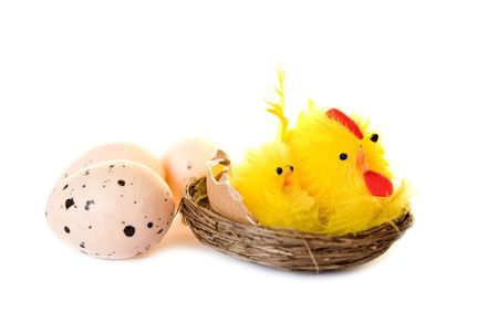 chickens and eggs on white photo