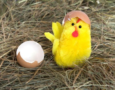 little yellow chicken on hay Stock Photo