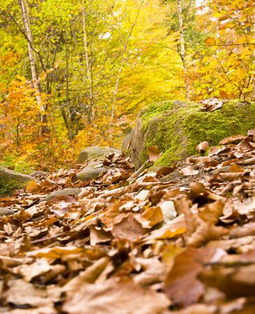 colorful autumn in woodland Stock Photo