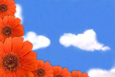 gerbera flower on blue sky photo