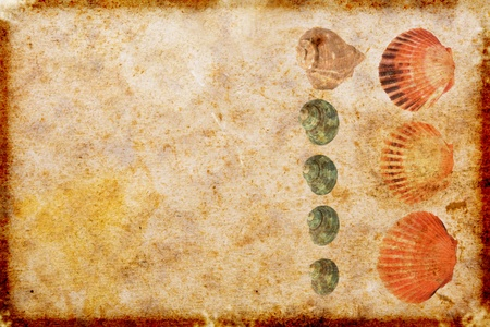 vintage  paper with sea shells photo