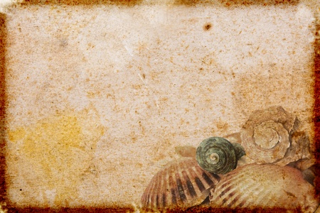 vintage  paper with sea shells Stock Photo
