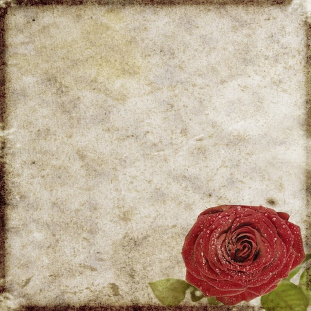 vintage floral background photo
