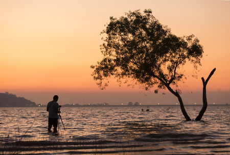 photographer taking sillhoutte of tree during sunset