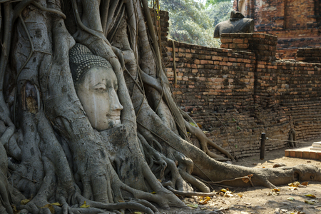Head of buddha statue is round by tree root at Ayutthaya, Thailand