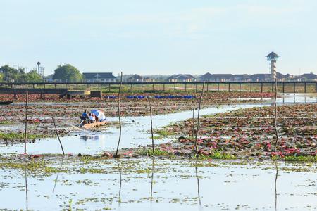 travelers travel by boat seeing lotus pond