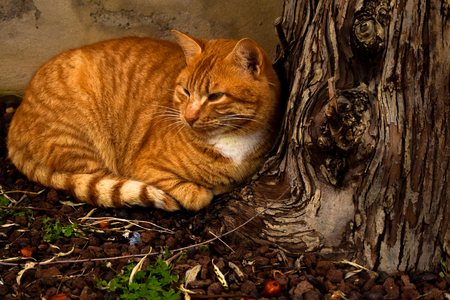 Cat lying over a tree