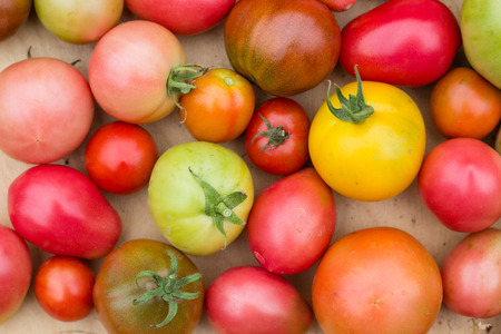 many colorful tomatoes with different sizes background