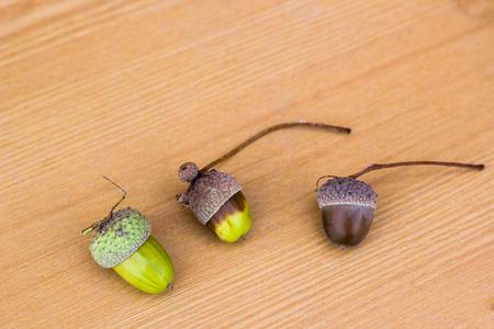 Three acorns on brown wooden background