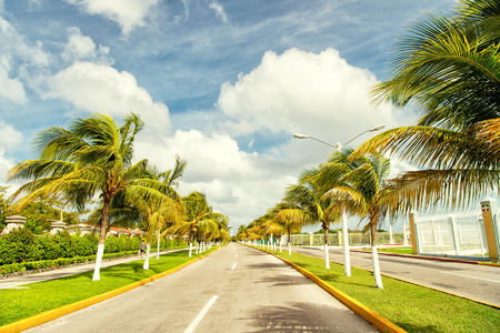 Exotic highway grey road with green palm trees in sunny windy weather outdoor on blue sky with white clouds background, cozumel, mexico