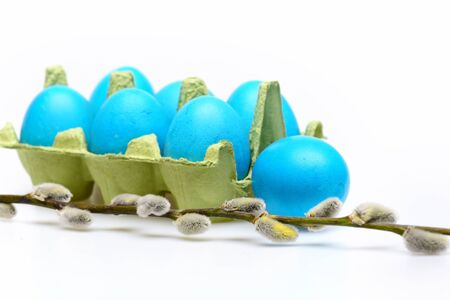set of traditional eggs painted in blue color inside carton box with spring blossoming willow twigs isolated on white background. Happy Easter concept