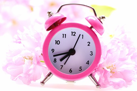Clock of striking pink colour placed among tender pink blossom of japanese sakura isolated on white background, close up and selective focus Stock Photo
