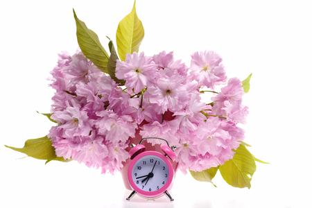 日本: Sakura flowers in bunch near pink retro alarm clock, isolated on white background. Concept of spring and awakening