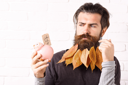 handsome bearded man with stylish mustache and autumn yellow leaves in long beard on serious face with pink piggy pig bank forgot something on white brick wall background Stock Photo