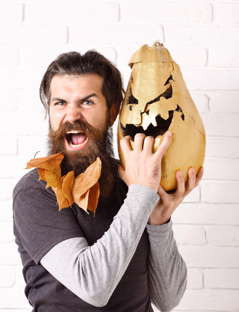 handsome bearded man with stylish mustache and autumn yellow leaves in long beard on angry face holding golden pumpkins on white brick wall background