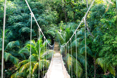 Jungle rope bridge hanging in rainforest of Honduras on natural green background. Wildlife and nature. Travel and adventure concept
