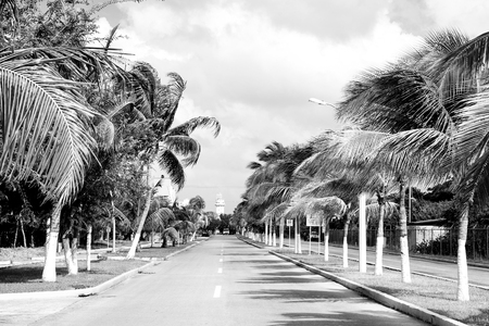 street road or car track with green palm trees sunny outdoor in summer Cozumel, Mexico on cloudy sky background. traveling and destinations Фото со стока