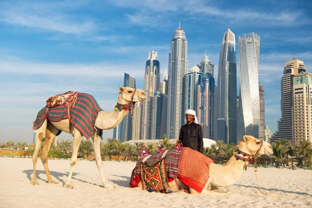 DUBAI, UAE - December 26, 2017: Camels on skyscrapers background at the beach . UAE Dubai Marina JBR beach style: camels and skyscrapers.
