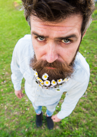 Hipster on serious face stand on grass, close up, defocused. Natural beauty concept. Man with beard and mustache enjoy spring, meadow background. Guy looks nicely with daisy flowers in beard