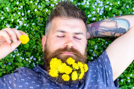 Guy with dandelions in beard relaxing, top view. Bearded man with dandelion flowers in beard lay on meadow, grass background. Man with beard on calm face put hand behind head. Relaxation concept