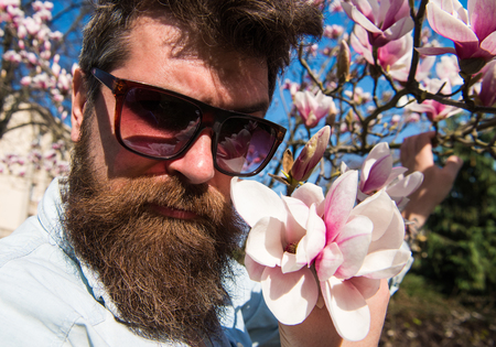 Guy looks cool with stylish sunglasses. Man with beard and mustache wears sunglasses on sunny day, magnolia flowers on background. Hipster with fashionable sunglasses.