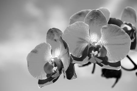 Orchid flower white on blue sky background. Phalaenopsis Orchid flower. Floral background. Zdjęcie Seryjne