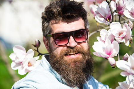 Man with beard and mustache wears sunglasses on sunny day, magnolia flowers on background. Fashion concept. Guy looks cool with stylish sunglasses. Hipster happy with fashionable sunglasses