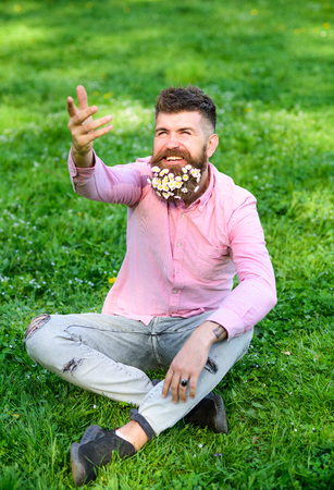 Bearded man with daisy flowers sits on grassplot, grass background. Hipster with daisies looks happy with sunny weather. Springtime concept. Man with beard on smiling face looks up against sunlight