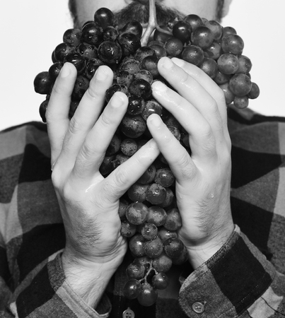 Farmer shows his harvest. Winegrower holds cluster of ripe grapes Foto de archivo