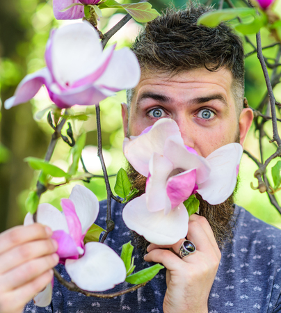 Hipster enjoys aroma of blossom. Perfumer concept. Man with beard and mustache on excited face near magnolia flowers, background defocused. Bearded man with fresh haircut sniffs bloom of magnolia