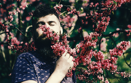 Tranquility concept. Man with beard and mustache on peaceful face near flowers on sunny day. Hipster enjoys aroma of violet blossom. Bearded man with fresh haircut sniffs bloom of judas tree