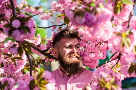 Hipster in pink shirt near branch of sakura. Man with beard and mustache on smiling face near flowers. Harmony with nature concept. Bearded man with stylish haircut with sakura flowers on background