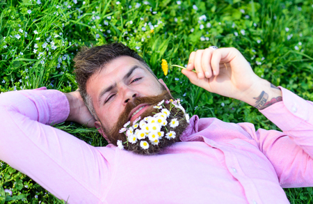 Macho with daisies in beard relaxing. Bearded man with daisy flowers in beard lay on grassplot, grass background. Pollen allergy concept. Man with beard on calm face sniffs dandelion