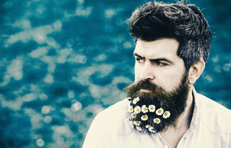 Guy with daisy or chamomile flowers in beard. Man with beard and mustache enjoy spring, green meadow background. Masculinity concept. Hipster on strict face, green grass background, copy space.