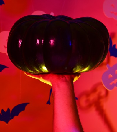 Halloween and party concept. Male hand holds black pumpkin on red background. Pumpkins and bats decorations. Halloween celebration with trick or treat, copy space.