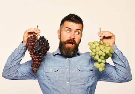 Viticulture and gardening concept. Winegrower with surprised face holds clusters of grapes. Farmer shows harvest. Man with beard holds bunches of black and green grapes isolated on white background Banco de Imagens