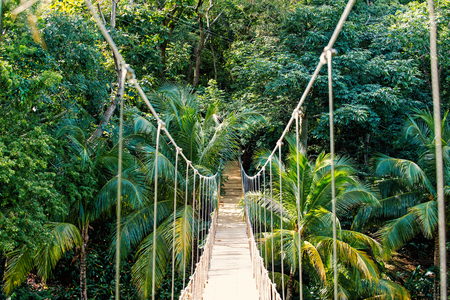 Jungle rope bridge hanging in rainforest of Honduras on natural green