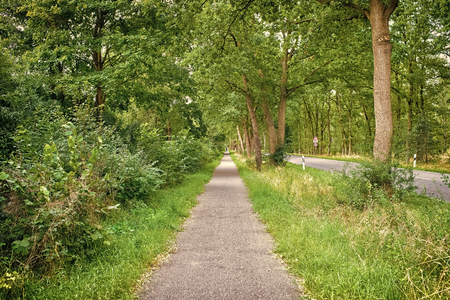 Sideway of countryside road in summer nature. Footpath with green trees and grass on sides. Direction and destination. Summer vacation travelling and wanderlust.
