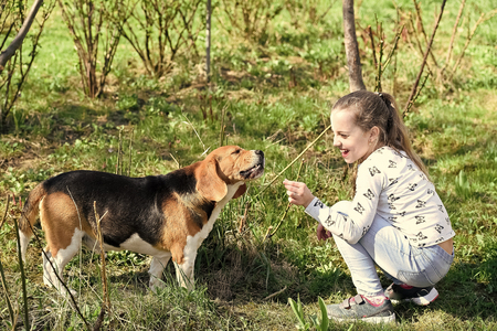 Happy child play with pet friend on sunny day. Little girl train dog on summer nature. Kid smile to beagle on fresh air outdoor. Childhood and friendship. Training dogs concept. Stock Photo
