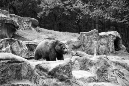 Large brown bear animal on natural landscape. Banque d'images