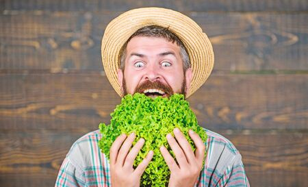 Green and healthy food. man chef with autumn crop. seasonal vitamin food. Useful vegetable. bearded mature farmer. organic and natural food. harvest festival. happy man eating green salad leaves 스톡 콘텐츠