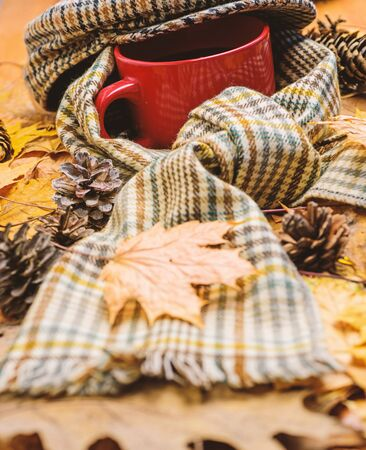 Mug drink and checkered scarf and kepi. Mug of tea covered with hat and surrounded by scarf autumnal background with fallen maple leaves and fir cones. Warming beverage. Hot drink for autumnal walk Stock fotó