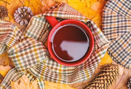Mug cozy aromatic beverage scarf and kepi. Hot drink for autumnal walk. Mug of tea covered surrounded by scarf autumnal background with fallen maple leaves and fir cones. Warming beverage