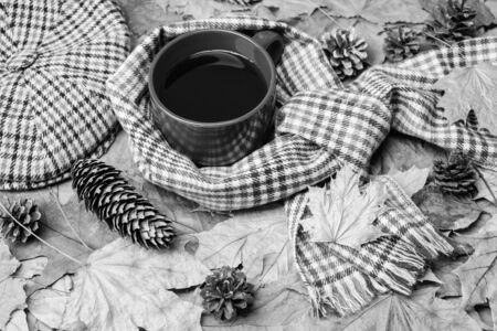 Mug of tea covered surrounded by scarf autumnal background with fallen maple leaves and fir cones. Mug cozy aromatic tea beverage scarf and hat. Hot drink for autumnal walk. Warming beverage.