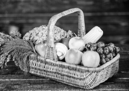 Basket with vegetables. harvest festival. basket with useful fruit and vegetables. rich autumn crop. seasonal vitamin. organic natural food. happy halloween. shopping in supermarket. healthy product.