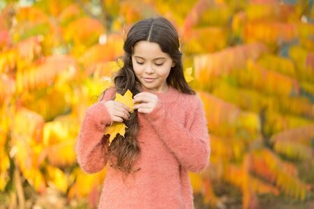 Natural beauty. Small girl wear autumn leaves in natural hair. Little child on natural landscape. Idyllic autumn nature. Natural cosmetics