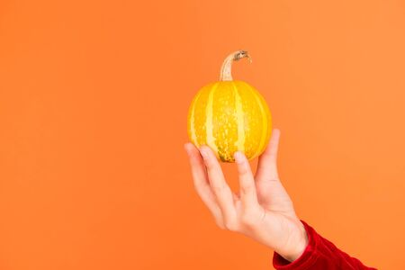 Pumpkin vegetable. Halloween attribute. Small decorative pumpkin in hand close up. Harvest and grocery shop. Jack lantern concept. Healthy food. Natural product. Homegrown vegetables. Cute pumpkin