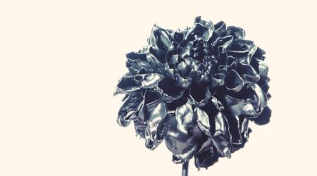 floristics business. Vintage. wealth and richness. natural retro beauty. luxury and success. metallized antique decoration. blue metallic chrysanthemum flower. beauty and fashion.