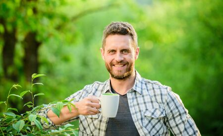 Green tea plantation. Whole leaf tea. Pleasant moment of self care. Natural drink. Healthy lifestyle. I prefer green tea. Refreshing drink. Man bearded tea farmer hold mug nature background