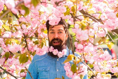 Natural beauty surrounds me. Handsome bearded man outdoors. Happy easter. Hipster in cherry bloom. Man in sakura blossom. Pink tender bloom. Weekend in garden concept. Walk in park. April events